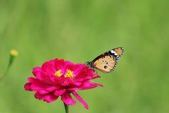Härlig fjäril på fotoet för rosa färgblommamateriel arkivfoton