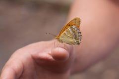 Härlig fjäril på handen Royaltyfri Fotografi