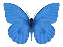 Härlig fjäril som isoleras på en vit bakgrund Arkivbilder