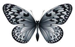 Härlig fjäril som isoleras på en vit bakgrund Royaltyfri Foto