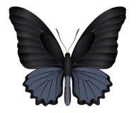 Härlig fjäril som isoleras på en vit bakgrund Arkivbild