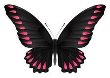 Härlig fjäril som isoleras på en vit bakgrund Fotografering för Bildbyråer
