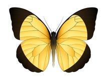 Härlig fjäril som isoleras på en vit bakgrund Arkivfoto