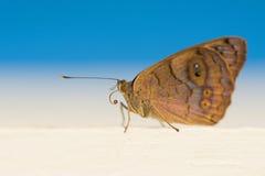 Härlig fjäril som sitter Foto som tas på stranden i Dominikanska republiken royaltyfria foton