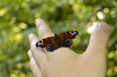 Härlig fjäril som sitter på hans hand arkivfoton