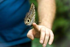 Härlig fjäril som sitter på mannens hand, slut upp arkivfoto