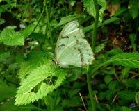 Härlig fjäril som vilar på gräsplansidor i en trädgård royaltyfri bild