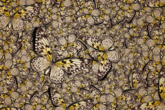 Härlig fjärilsbakgrund Arkivbild