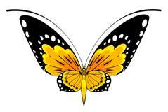 härlig fjärilsdesign Royaltyfri Bild