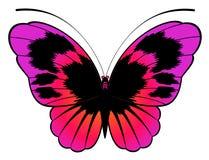 härlig fjärilsdesign Arkivbild