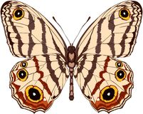 Härlig fjärilsillustration för vektor för utskrift Royaltyfri Bild