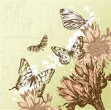 härlig fjärilstappning för bakgrund Arkivfoto