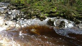 Härlig flödande flod med solstrålar Royaltyfri Fotografi