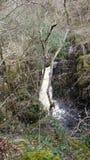 Härlig flödande flod med solstrålar Royaltyfria Foton