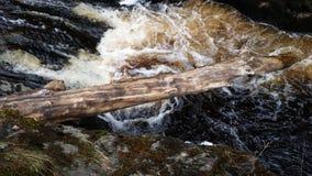 Härlig flödande vattenfall med det stupade trädet Royaltyfri Bild