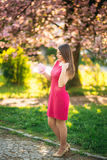 Härlig flicka som poserar till fotografen mot bakgrunden av blommande rosa träd Vår Sakura Arkivbilder