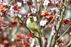 Härlig flirty kvinnlig sparrow Royaltyfria Foton