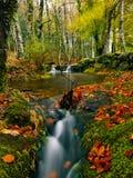 härlig flod Royaltyfri Foto