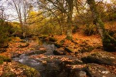 Härlig flod för höstlandskap bland bruntsidor och träd Aguilar de Campoo royaltyfria foton