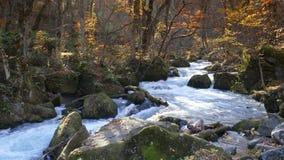 Härlig flod för Oirase klyfta som druing höstsäsongen, Japan arkivfilmer