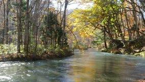 Härlig flod för Oirase klyfta som druing höstsäsongen, Japan stock video