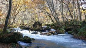 Härlig flod för Oirase klyfta som druing höstsäsongen, Japan lager videofilmer