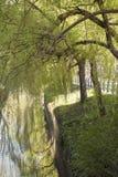 Härlig flod med träd och gräs som över hänger Arkivfoto