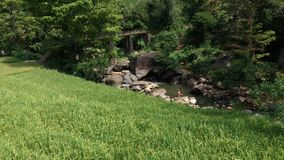 Härlig flod och en bro med ett risfältfält på surrounden Royaltyfria Foton