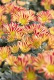 Härlig flora Royaltyfria Foton