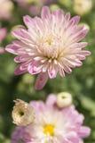 Härlig flora Arkivfoto