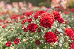 Härlig flora Royaltyfria Bilder