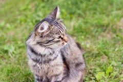 Härlig fluffig grå katt som sitter på gräset i trädgården arkivfoto