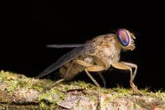 härlig fluga Arkivbild