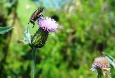 Härlig fluga Fotografering för Bildbyråer