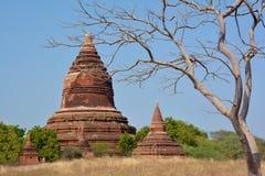Härlig forntida stupa med det pittoreska trädet på förgrunden Arkivbilder