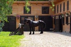 Härlig Friesian häst utanför stall arkivfoto