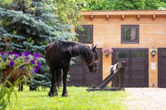 Härlig Friesian häst utanför stall royaltyfria bilder