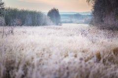 Härlig frostig morgon i bygd Royaltyfri Fotografi