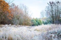 Härlig frostig morgon i bygd Royaltyfri Bild