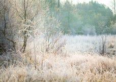 Härlig frostig morgon i bygd Arkivfoto