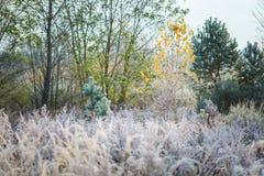 Härlig frostig morgon i bygd Royaltyfria Bilder