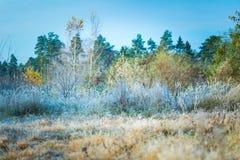Härlig frostig morgon i bygd Royaltyfri Foto