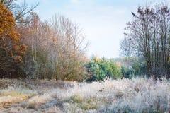 Härlig frostig morgon i bygd Fotografering för Bildbyråer
