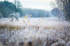 Härlig frostig morgon i bygd Arkivbilder