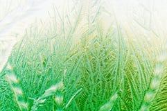 Härlig frostig naturlig modell på fönsterexponeringsglas royaltyfri foto
