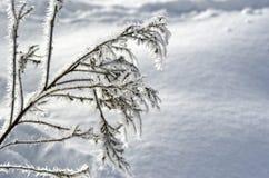 Härlig frostmodell på gräset Frostigt kort Mjukhet Royaltyfria Foton