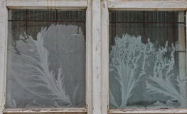 Härlig frostwork på gammalt fönster Royaltyfri Fotografi