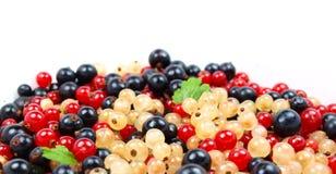 härlig frukt Arkivbilder
