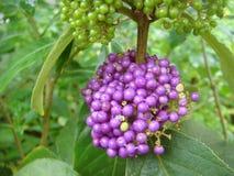 Härlig frukt av tre av Thailand Arkivfoto