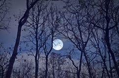 Härlig fullmåne i blå himmel över skogen royaltyfri foto